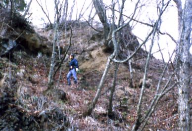 Iguchi explores forests for beetles.